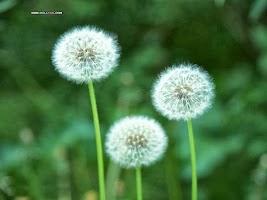 Các loại hoa đẹp có lợi cho sức khỏe con người