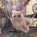 Lailah Tamburro's profile image