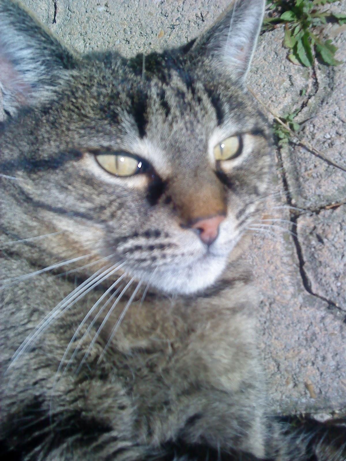 frotter ma chatte serrée trentenaire sexe machines