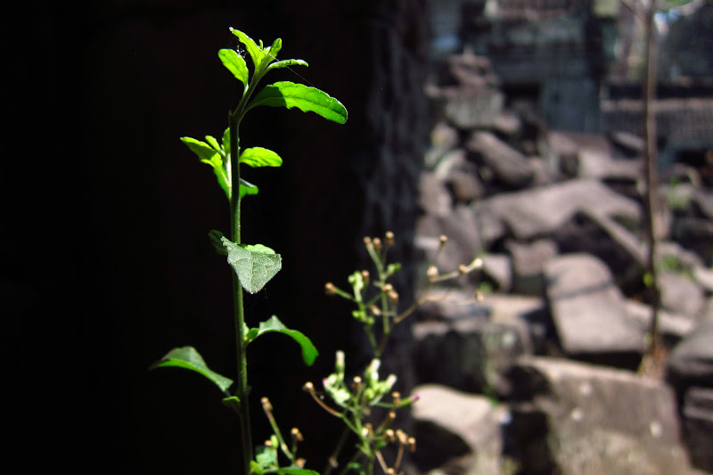 Green plant in the rubble