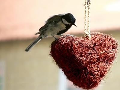Nidito de amor - Imagen desde Web
