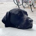 Badewa Kayode