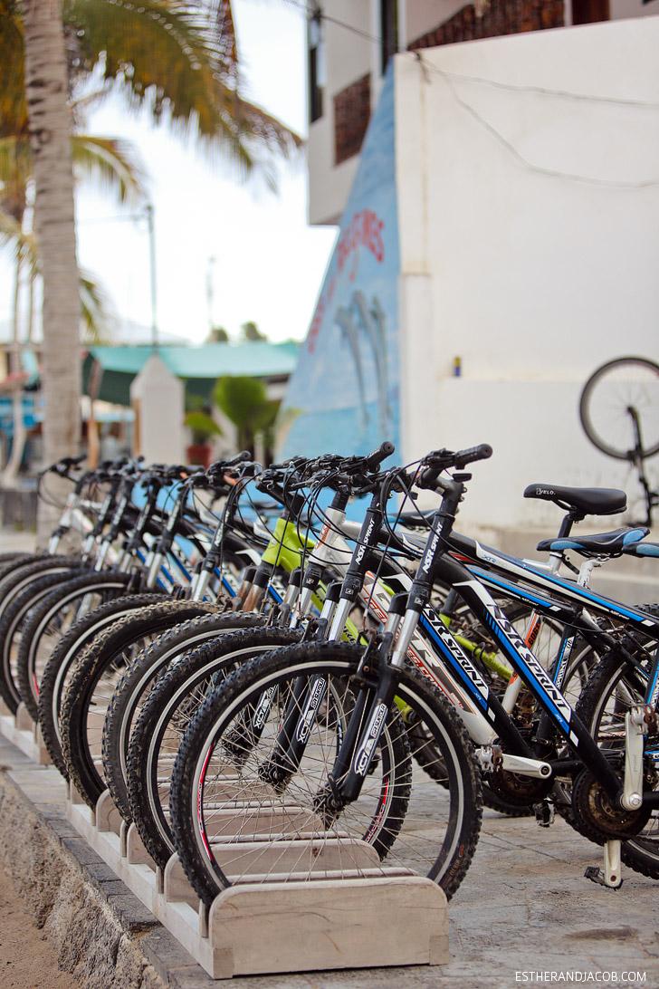 Bike riding in the Wetlands Isabela Island Galapagos.