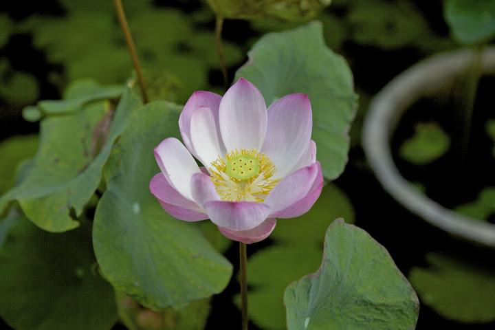 Још један леп цвет