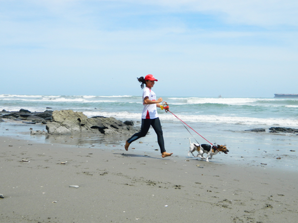 walk by the beach with jack russell terrier