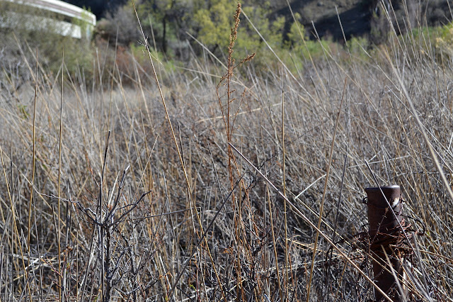 metal post with barbed wire among the tule reeds