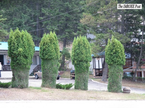 the facemash post - pohon mirip alat kelamin manusia - mirip vagina wanita dan penis pria - [Melirik Undang-Undang Pornografi] Pohon Harusnya Tidak Seperti Ini