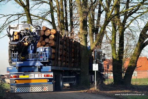 Houtoogst in de bossen van overloon 17-01-2012 (23).JPG