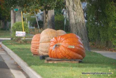 955 pound pumpkin, Frankfort, MI