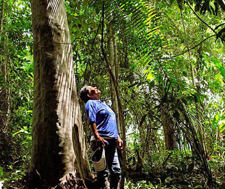 Леса в Перу