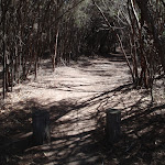 Track to Bournda Lagoon (105157)