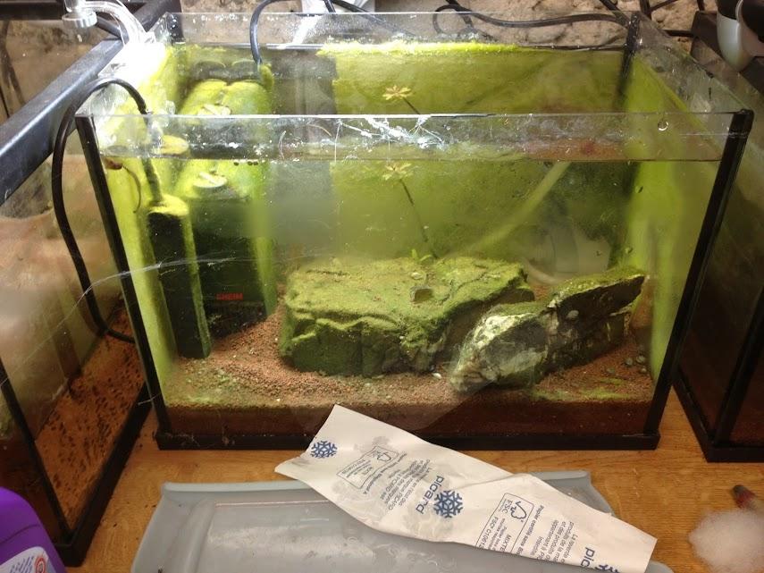 Ma petit histoire Aquariophile de 2009 à aujourd'hui  Aquarium+046