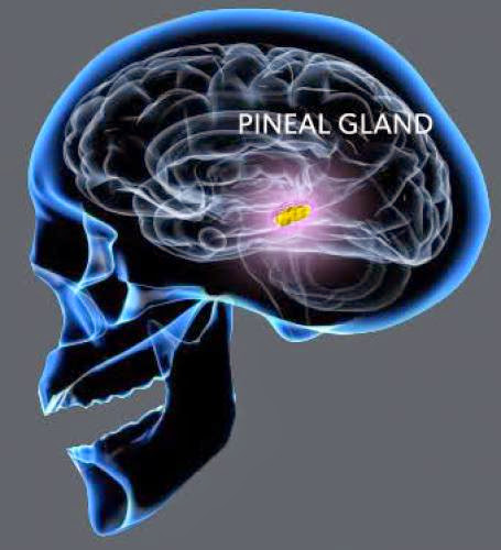 The Pineal Gland Third Eye The Biggest Cover Up In History Fluoride