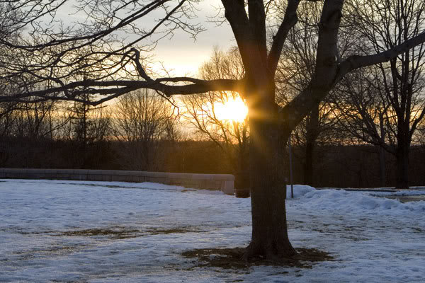 Зимнее дерево в Бостоне