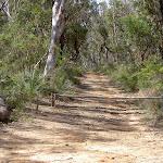 McNicol Service Trail (14230)