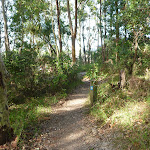 Eucalypt Foerst Green Point Reserve (389942)