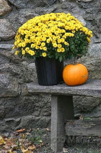 Fall Flower Magick