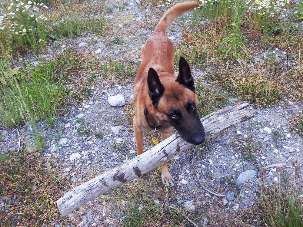 Photographie de chiens & chats - Page 2 20120721_184030