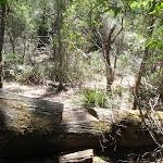 Track cut over log (105907)