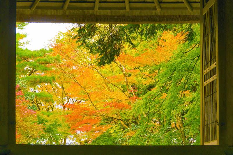 京都 紅葉 法然院 写真2