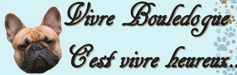 Forum Vivre Bouledogue