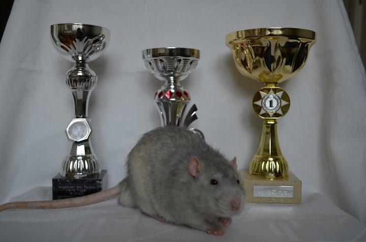 Pan Musil a poháry
