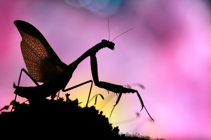 Nadav Bagim,Magical Photos Of Insects,photography,insects photography,insects
