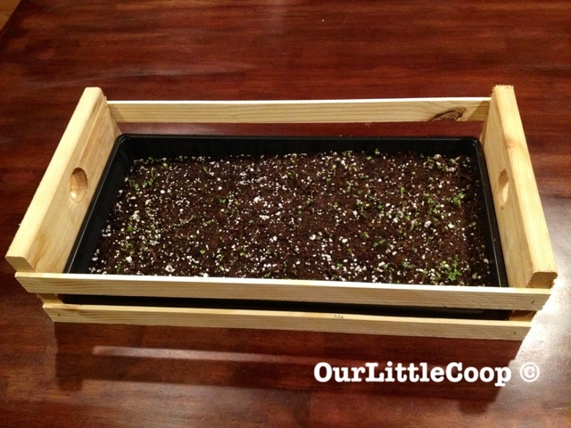 Basic Seed Flat With Tomato Seedlings Urban Gardening, Backyard, Wood Lathe