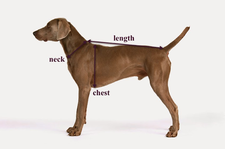 Chelsea Dogs Luxury Dog Boutique Sizing Guide