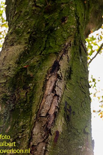 Bomen gekapt Museumlaan in overloon 20-10-2014 (7).jpg