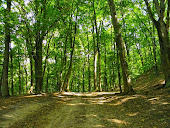 Чёрный лес