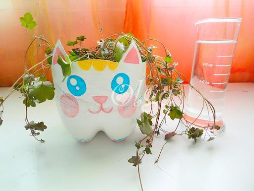 maceta gato - flower pot plant