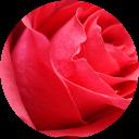 Rose Nelsen