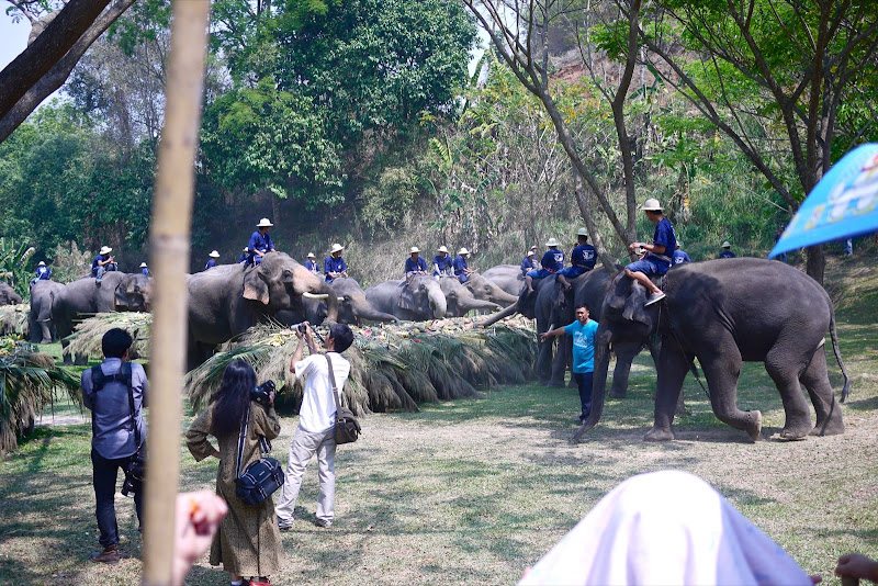Очередной День Слона