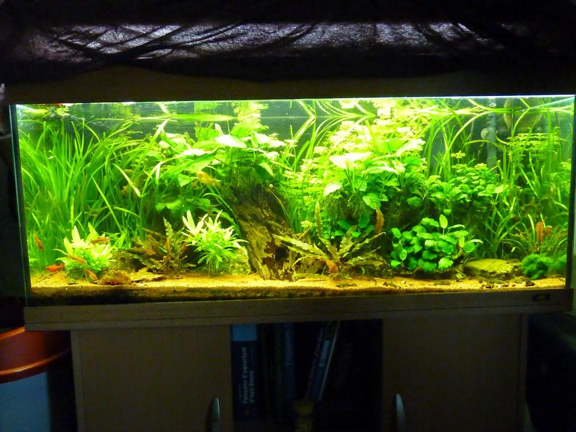 Ma petit fishroom P1060134