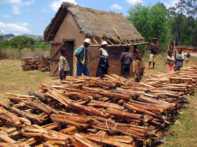 صور من مدغشقر Madagascar 14946601796