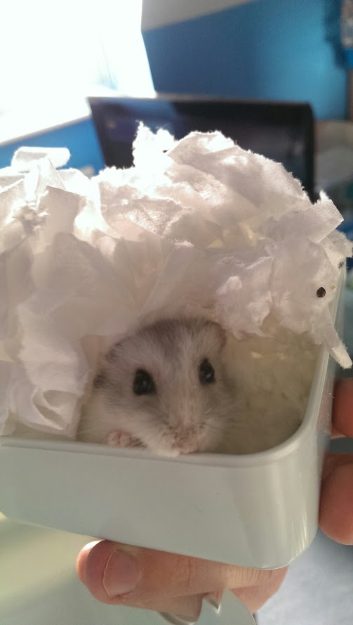 8 Interesting Winter White Hamster Facts