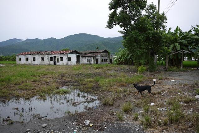 dog walking on grass near some apparently abandoned building in Yuli, Taiwan
