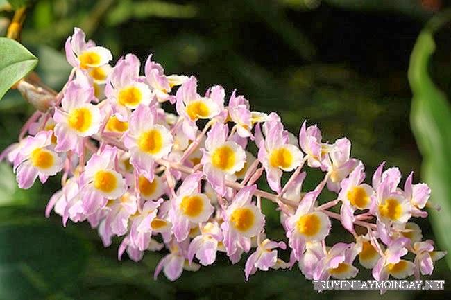 Tuyển tập 16 loài hoa đẹp nhất thế giới
