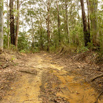German Point Rd in the Watagans (321593)