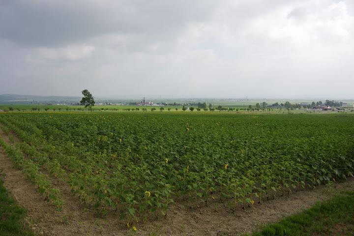 写真:東側のエリア