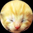 Nasch Katze