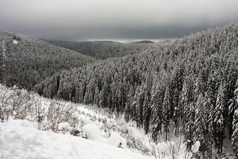 Azuga Predeal zapada brazi schi de tura