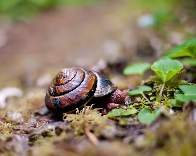 forrest snail