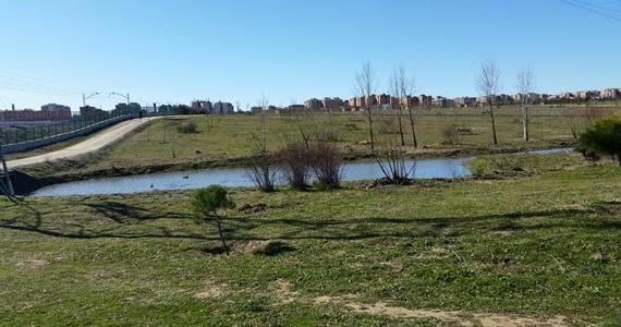 Lagunas artificiales de cantoechado en el parque bosquesur for Lagunas artificiales construccion
