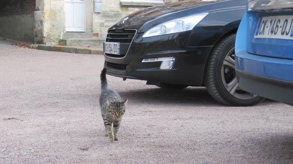 フランスノルマンディー地方ボーモン村の猫