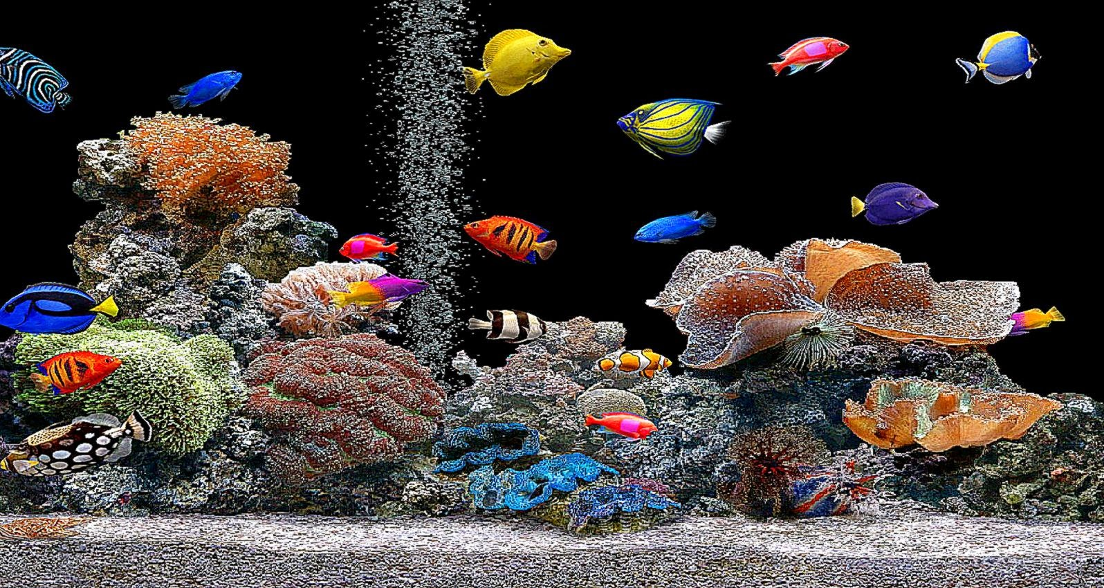 3d aquarium screensaver wallpaper best free hd wallpaper