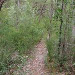 Florabella Track (73428)