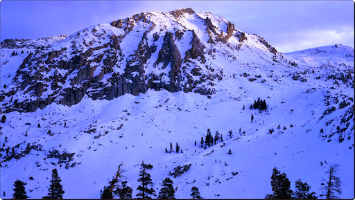 Snow-Covered, Sequoia National Park, California.jpg