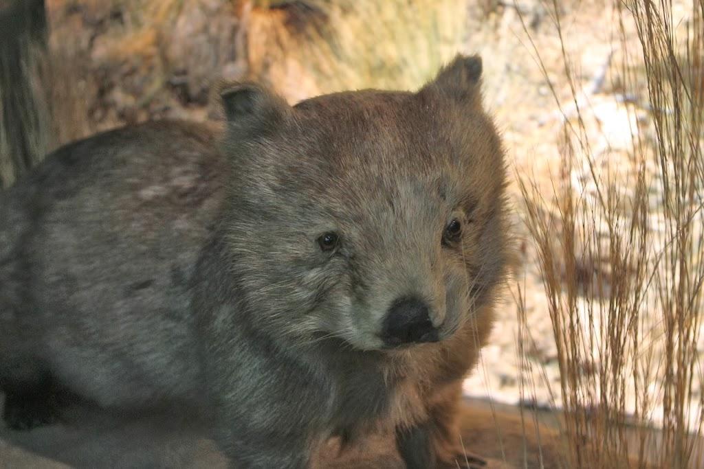 Ein kleines Tier aus Australien